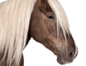 horse_small.png
