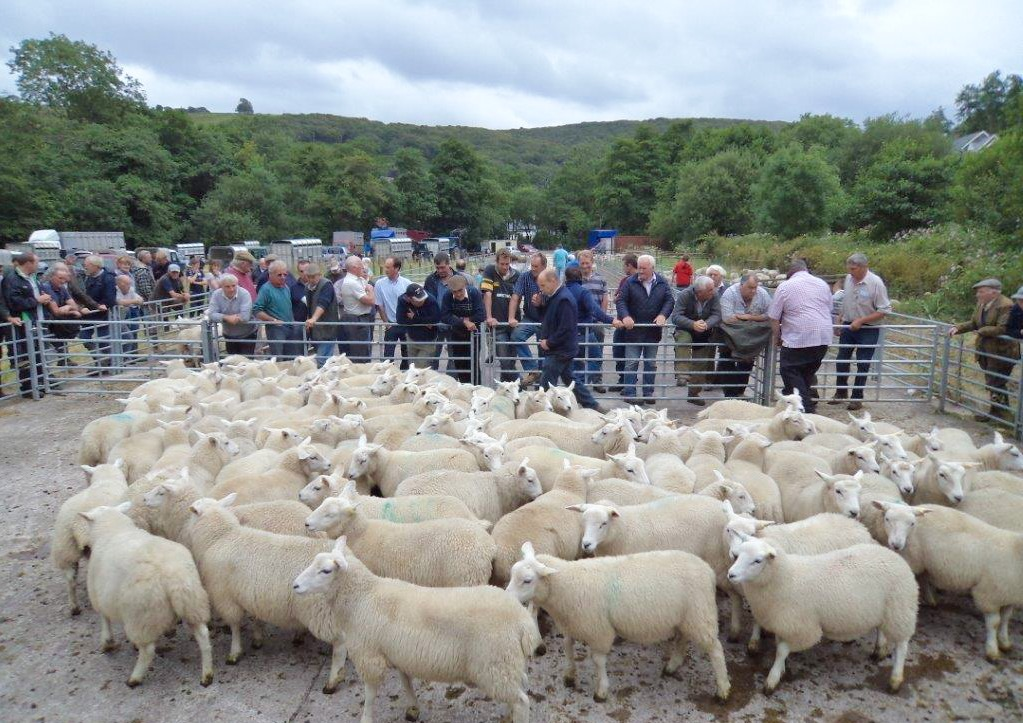 First Blackmill Sheep Sale of the Year