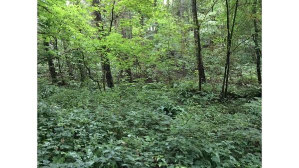 <strong>LOT 5: </strong>Approx 15.4 acres of land at Coed y Tor, St Hilary, CF71 7DP